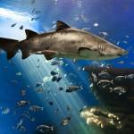Aquarium-sevilla-multiturismo