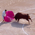Bullfight-cordoba-multiturismo